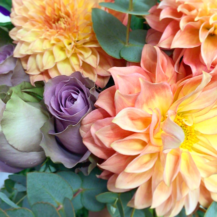 a close up picture of peach dahlias, purple rose and eucalyptus