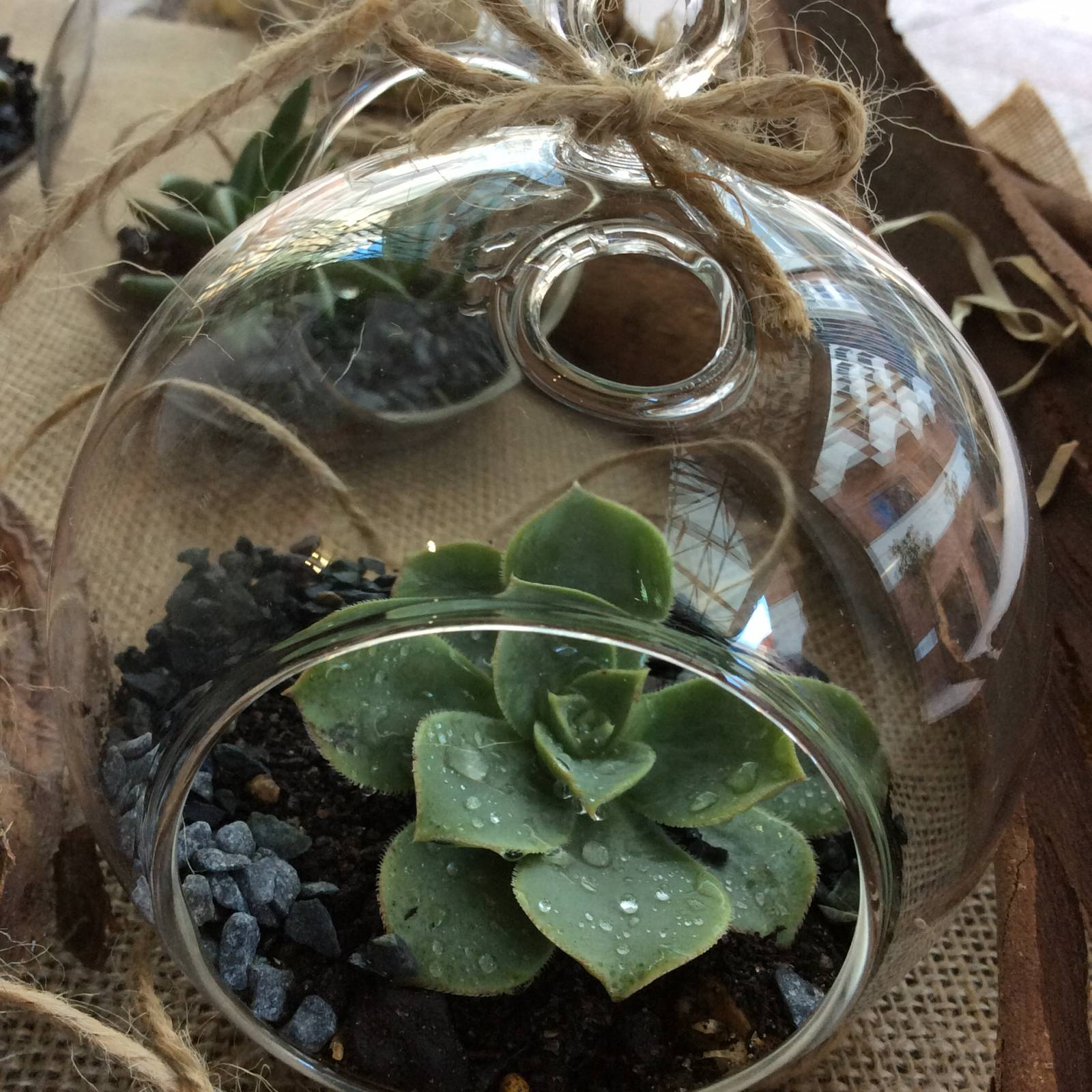 a hollow glass sphere with a succulent planted inside. hanging from twine.