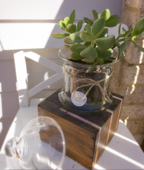 A glass vase potted with succulent plant- A Touch of Class Florist