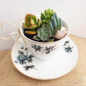 Tea Cup Garden - A Touch of Class Florist