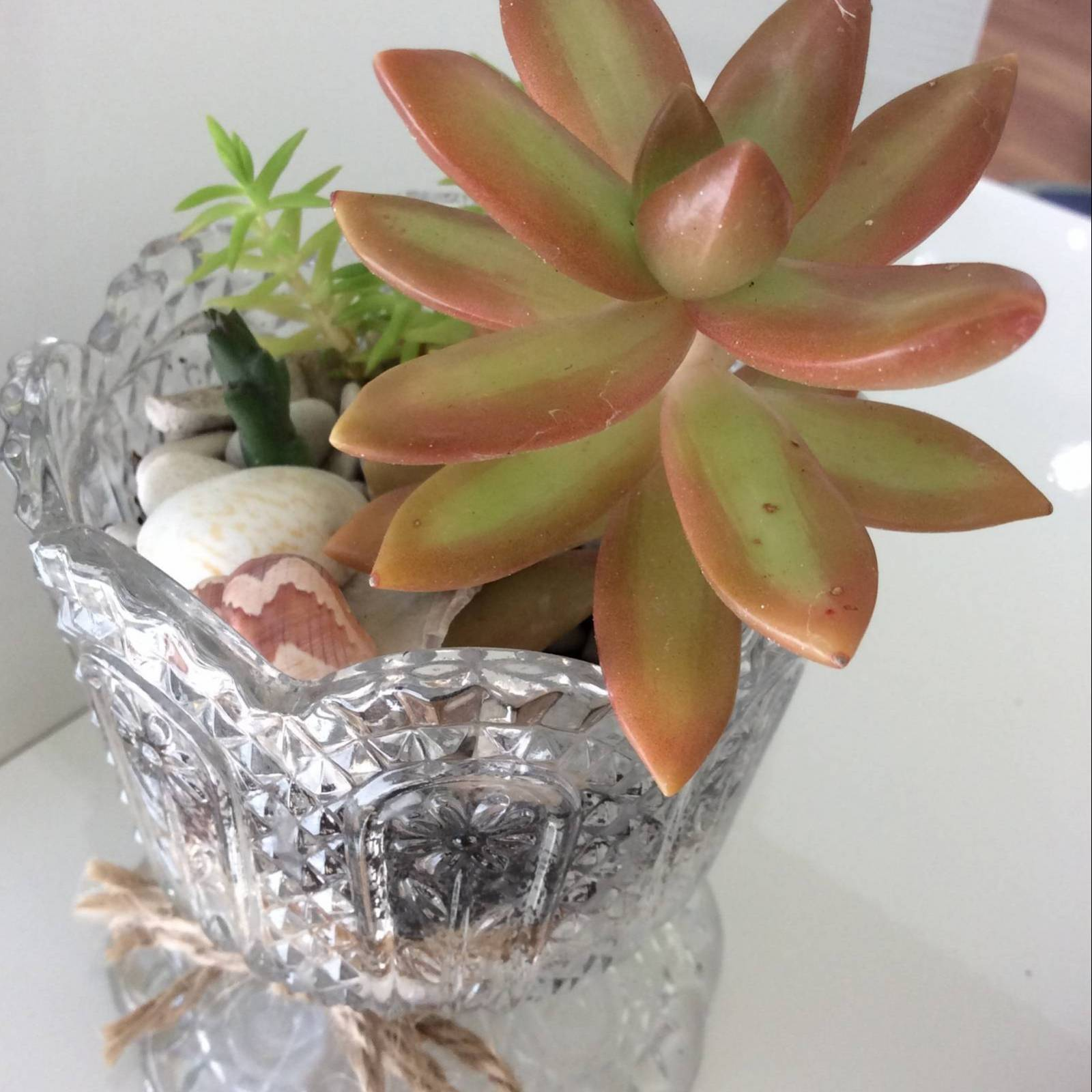 a glass trifle glass with planted succulents indide.