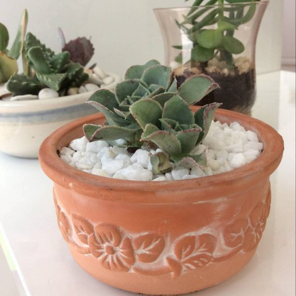 A Small Succulent Pot - A Touch of Class Florist