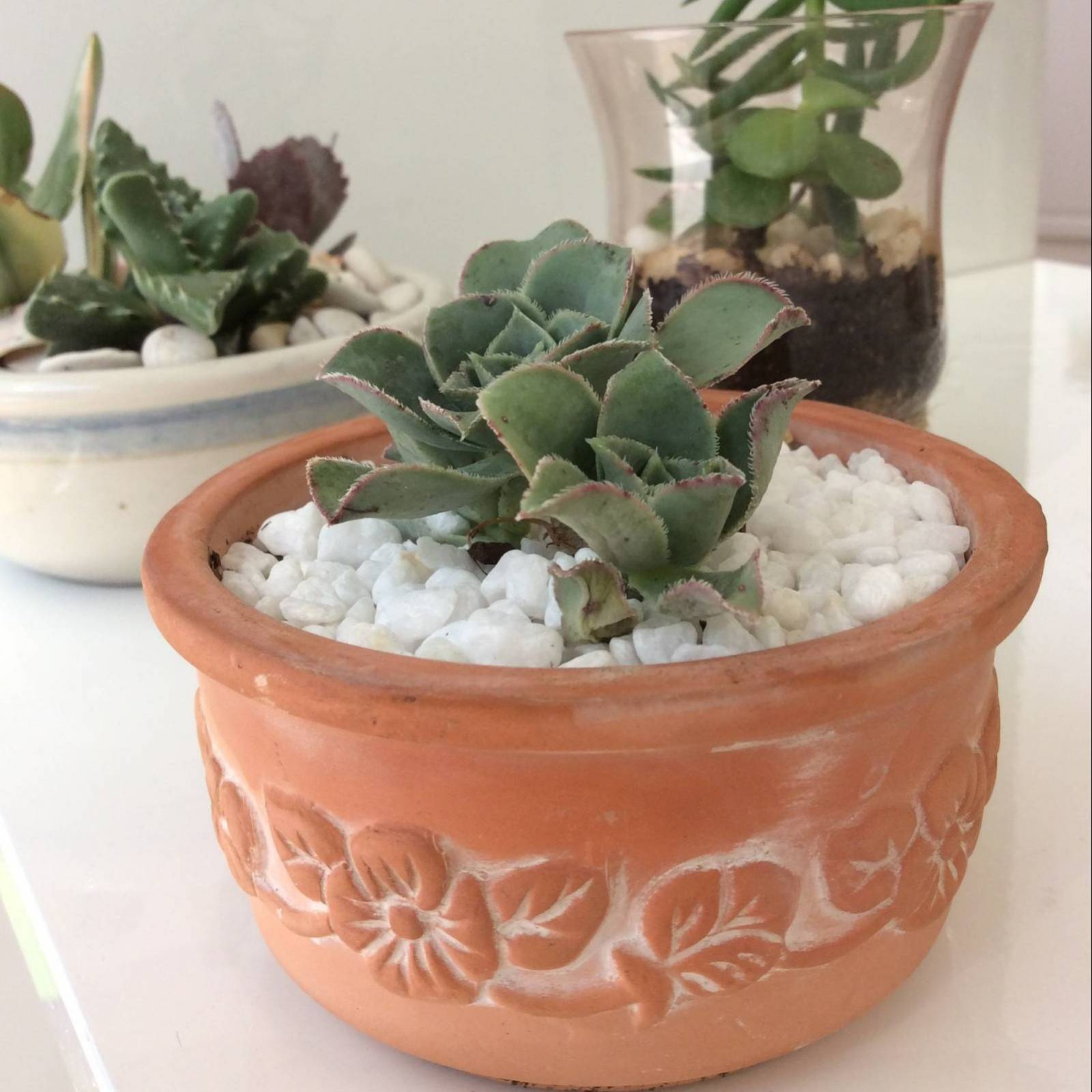 small terracotta pot with a planted succulent inside.
