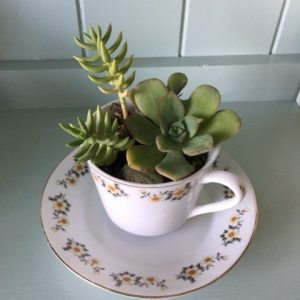 a china tea cup and saucer planted with succulents.