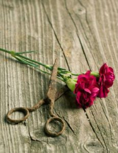 a pair of old garden scissors and two stems of pink carnations lying on a wooden table.