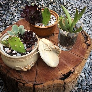 3 succulent pots sitting on a log