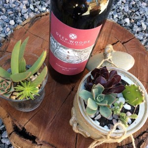 Red wine and succulent pot