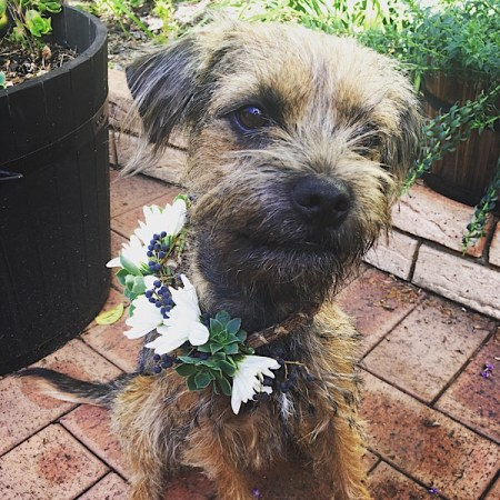Floral Dog Collar- A Touch of Class Florist