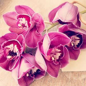 Cut cymbidium orchid stem simply but beautifully wrapped.