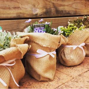 Hessian wrapped potted plant