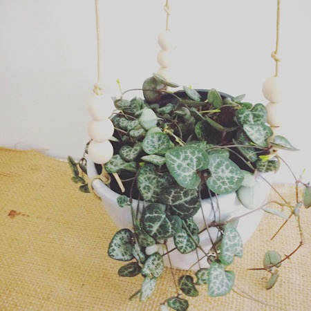 ceramic hanging pot with trailing plant