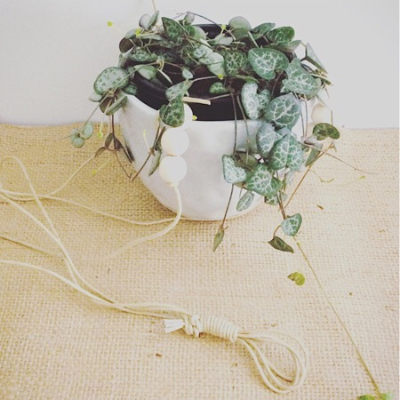 ceramic hanging pot with trailing plant.