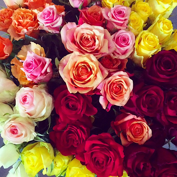 Image result for image of mixed colour roses