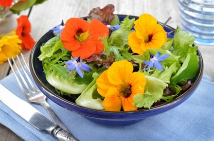 Edible Flowers Make a Comeback Amongst Foodies