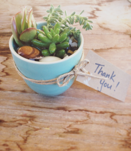 Mini Succulent gift pot