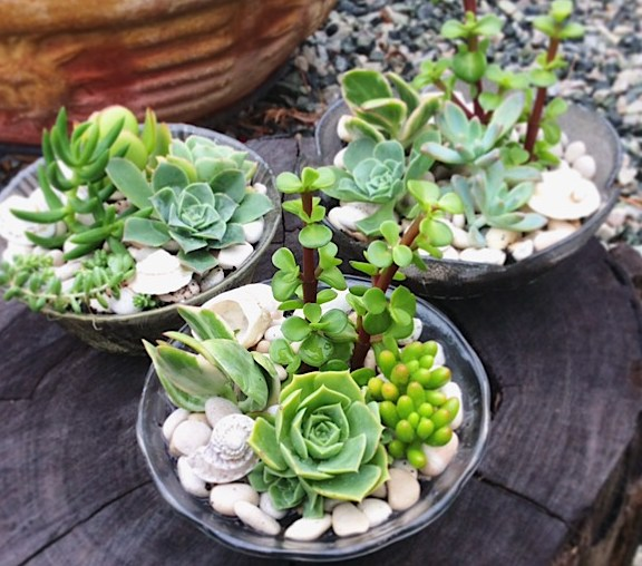 A Jelly Bowl of Succulents - A Touch of Class Florist