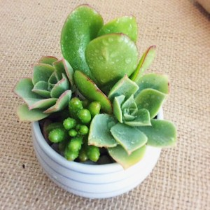 A Samll Succulent Pot - A Touch of Class Florist