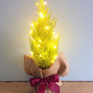 Real Potted Miniature Christmas Tree - A Touch of Class Florist