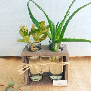 Watch Me Grow - two tube vases in a wooden stand with a cut succulents in each