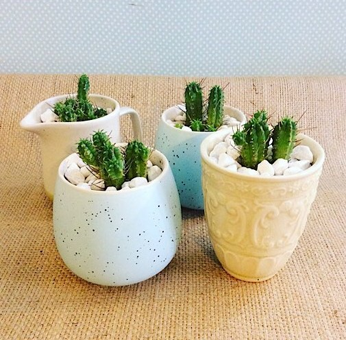 Mini Cactus Pots are a small cactus potted in an assorted ceramic pot - A Touch of Class Florist Perth
