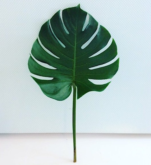 Tropical Monstera Leaves includes 5 stems of Monstera Leaves for you to place in your favourite vase a thome for an elegant minimalist decor boost - A Touch of Class Florist Perth