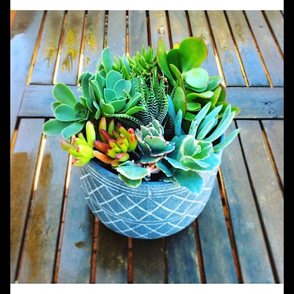 Succulent Garden is a ceramic pot filled with a variety of succluents ideal for your summer patio - A Touch of class Florist Perth