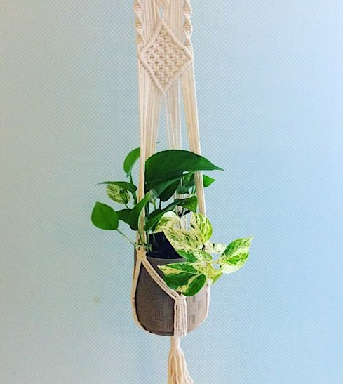 Vintage Vibes- Macrame plant hanger and potted plant - A Touch of Class Florist Perth
