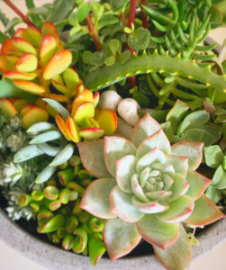 A Big And Beautiful Succulent Garden